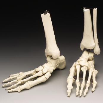 Preliminary work for a reconstruction of Richard III's feet is underway